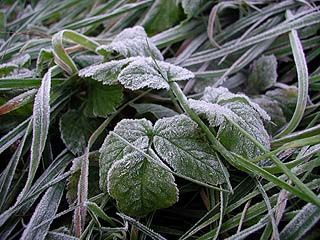 На территории Воронежской области ожидаются заморозки