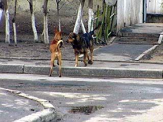 На улице Моисеева бродячие собаки нападают на людей