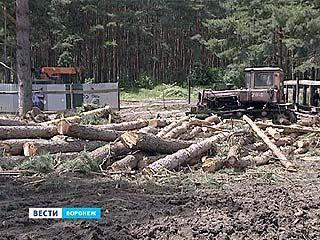 На улице Мордасовой спилили деревья - будет стройка, а местные против
