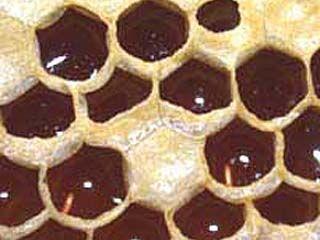 Настоящий мед на вкус терпкий и с кислинкой