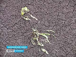 Несколько районов области готовы объявить чрезвычайное положение из-за засухи