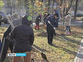Несмотря на мороз, 24 тысячи воронежцев приняли участие в субботнике