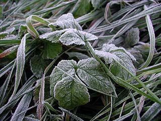 Ночные заморозки сильно повредили посевам области