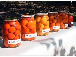 Новый сорт высокоурожайных абрикосов вывели в Воронеже