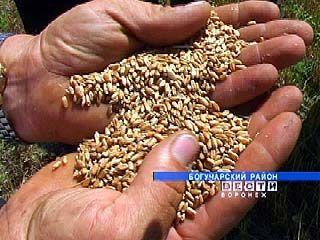 Новый урожай зерна будет на треть меньше обычного