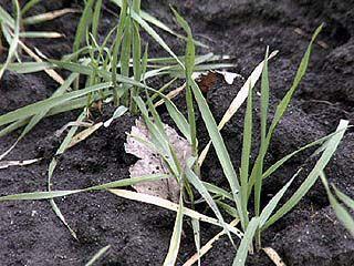 Нынешняя погода несет опасность для растений