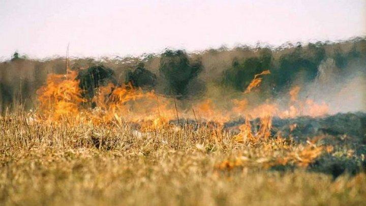 Жара довела пожарную опасность в Воронежской области до максимума