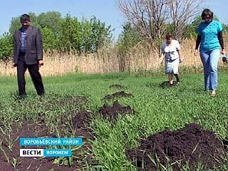 Огродники из Воробьевского района спасают урожай