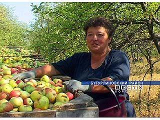 Охранять свой урожай приходится садоводам Бутурлиновского района