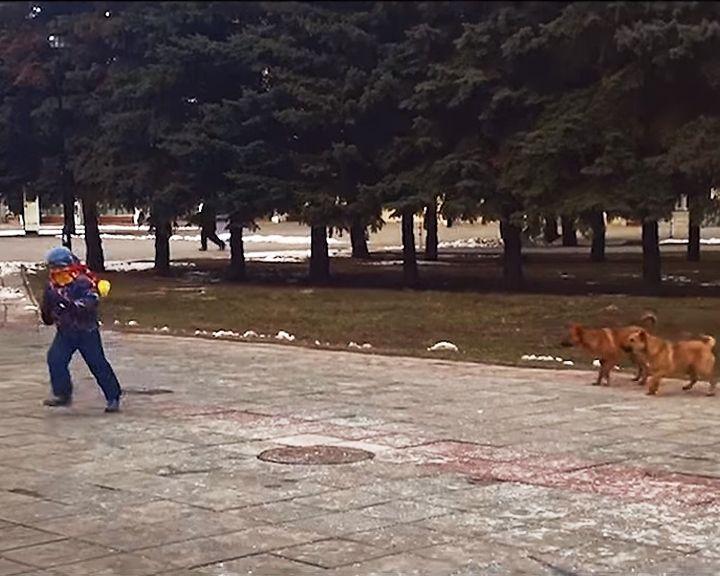 ВИДЕО: Около Воронежской областной Думы стая собак бросается на детей