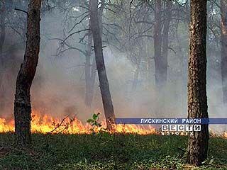 Организации тушения лесных пожаров посветят совещание