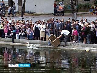 Озеро на Минской снова украшают лебеди