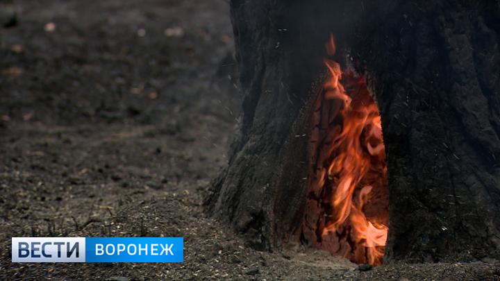 В Воронежском заповеднике после крупного двухдневного пожара ужесточили режим охраны