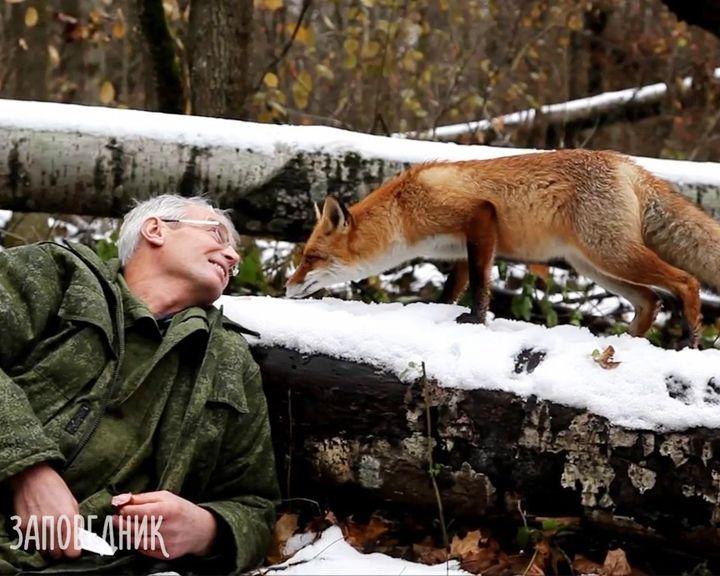 ВИДЕО: Сотрудники Воронежского заповедника приручили лису и назвали Рыжиком