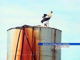 Пара белых аистов свила гнездо на водонапорной башне в Танциреях