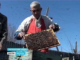 Пчеловоды Воронежского региона открыли сезон