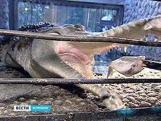 Питомцы Воронежского зоопарка теперь будут трапезничать напоказ