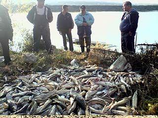 Почти 2 миллиона рублей за хищнический лов рыбы должны выплатить браконьеры