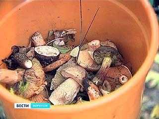 Под Воронежем прошёл чемпионат грибников