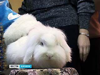 Погладишь кролика - в новом году будешь счастлив