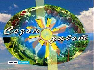 """Программа """"Сезон забот"""" празднует свой десятый день рождения"""