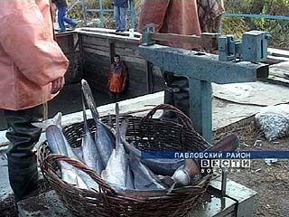 Производство рыбы в Воронежской области может вырасти в два раза