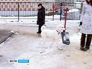 Пудель Виктории Абрамовой изучил защитно-караульную службу