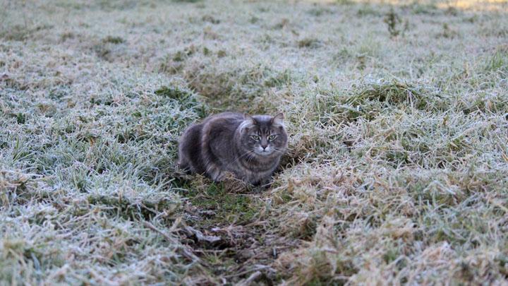 Спасатели вновь предупредили о заморозках в Воронежской области