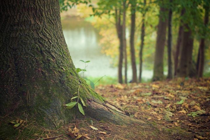 Воронежцев пригласили на публичные слушания по созданию вокруг города «зеленого пояса»