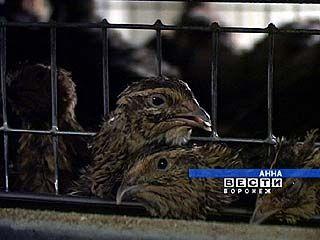 Рабочие Аннинского перепелиного хозяйства требуют выплатить зарплату
