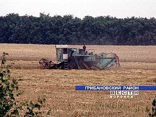 Районы Воронежской области включились в уборочную страду