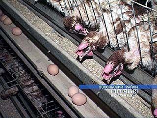 Разработаны меры действий в случае вспышки заболевания птичьим гриппом