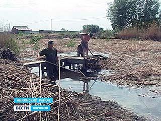Река Курлак в Аннинском районе на грани экологической катастрофы