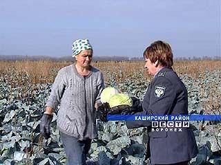 Россельхознадзор проверил за последний месяц три тысячи тонн овощей