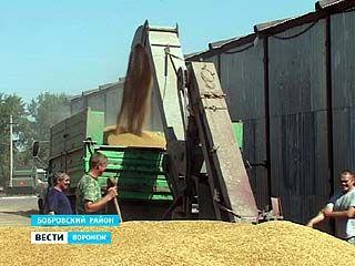 Российские аграрии подводят первые итоги уборочного сезона