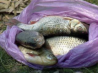 Рыбакам закон не писан