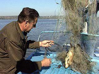 Рыбы на Дону и его притоках становится всё меньше