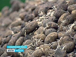С 1 июня вступят в силу ограничения на ввоз из Евросоюза семенного картофеля
