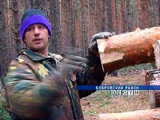 Самое распространенное экологическое преступление в области - вырубка деревьев