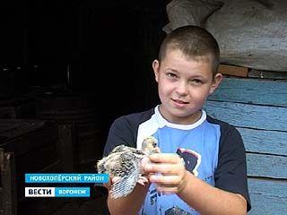 Самый юный голубятник области живёт в селе Елань-Колено