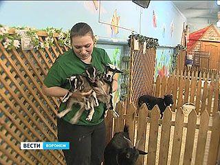 Счастливчик, Везунчик и Удача Воронежского зоопарка