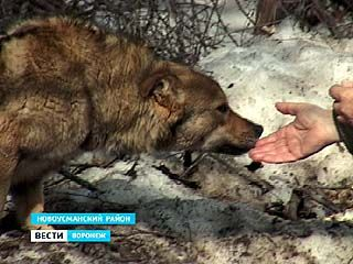 Шефство над псом взяли жители Новоусманского района