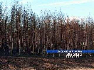 Сильнейший пожар уничтожил 50 гектаров лискинского леса