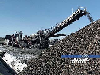 Собран миллион тонн сахарной свеклы