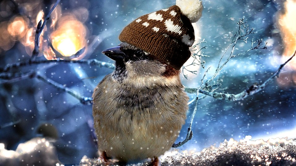 Метеорологи рассказали о погоде в феврале в Воронежской области