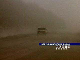 Сразу несколько районов области накрыла плотная завеса тумана