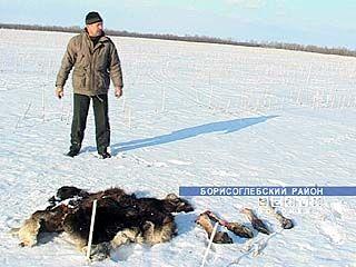 Стельную лосиху застрелили в упор