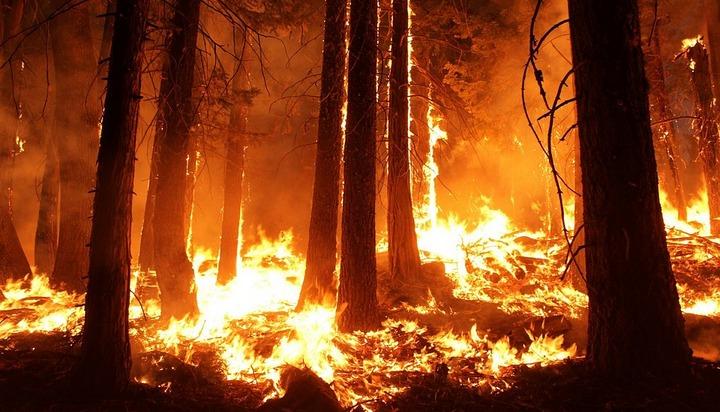 Воронежские леса попали в зону высокого риска возникновения пожаров