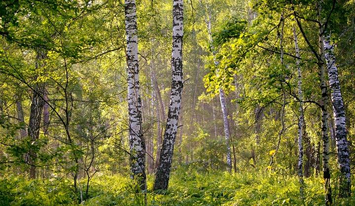 В Воронежской области предпримут вторую попытку создания «зелёного пояса»