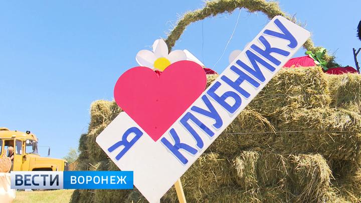 Три «К» и клубника! Как прошёл фестиваль ароматной ягоды в Воронежской области